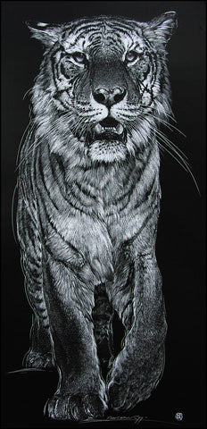 Tiger - Scratch Board Print