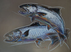 Coho - Silver Salmon - Print of Pastel Drawing