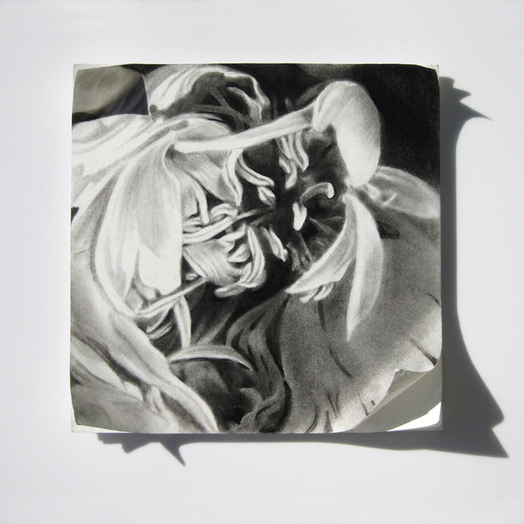 Charcoal on Mat Board by Gina Haywood
