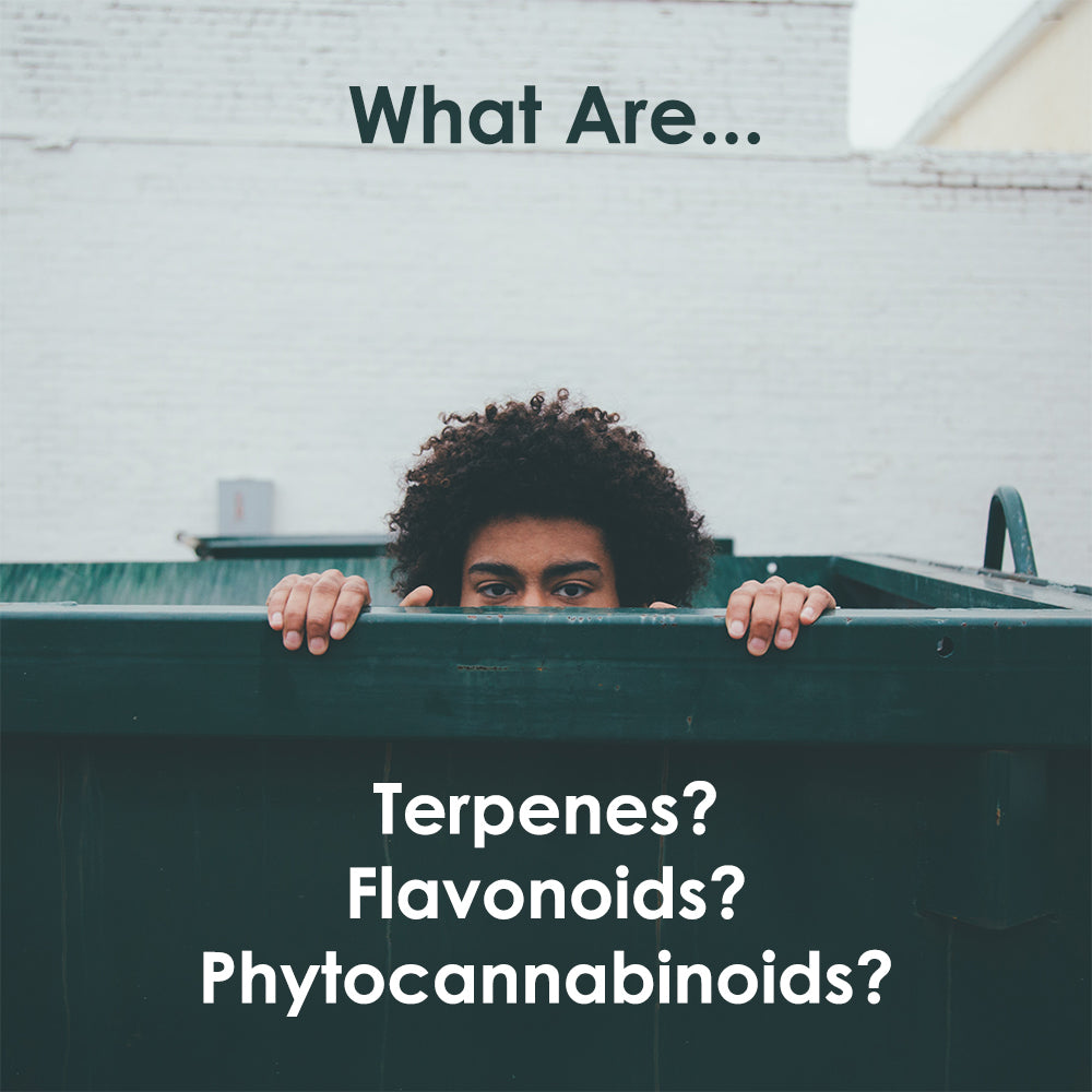 What Are Terpenes, Flavonoids, and Phytocannabinoids?