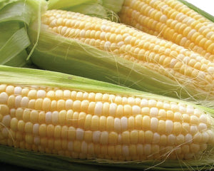 Seeds-Double Standard Organic Corn