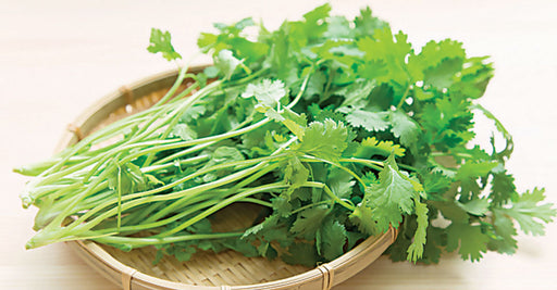 Cilantro Iceless 1 bunch