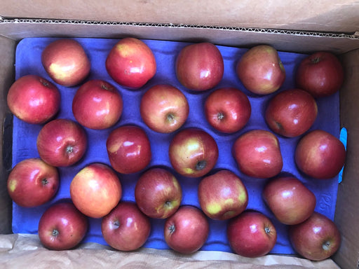 Fuji Apple Small 10 ct