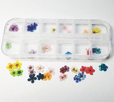 Dried Flowers Pack 1