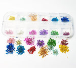 Dried Flowers Pack 2