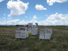 Bloom Honey bees arriving in Colorado