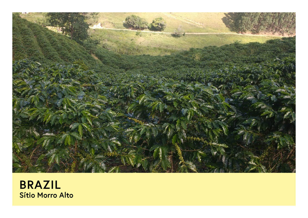 Brazil | Sítio Morro Alto  | Red Catuai | Pulped Natural | Filter | 250g