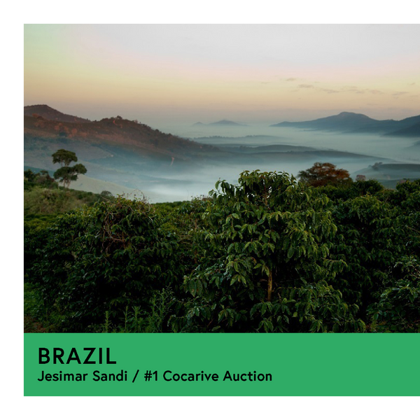 Brazil | Jesimar Sandi - #1 Cocarive Auction | Yellow Catuai | Natural | Filter | 250g - Proud Mary Coffee Melbourne