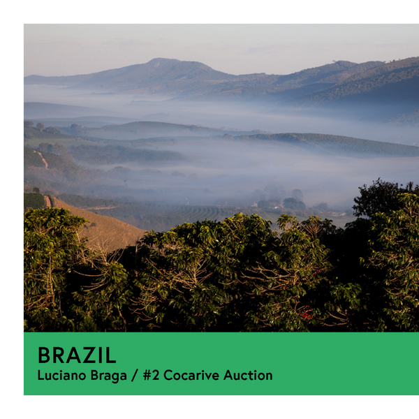 Brazil | Luciano Braga - #2 Cocarive Auction | Yellow Bourbon | Natural | Filter | 250g - Proud Mary Coffee Melbourne