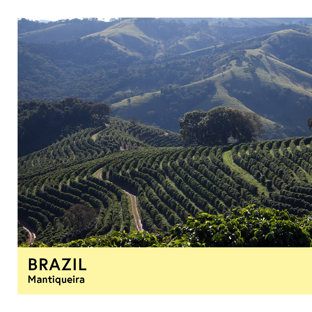 Brazil | Mantiqueira | Yellow Catuai & Yellow Bourbon | Natural | Espresso | 250g - Proud Mary Coffee Melbourne
