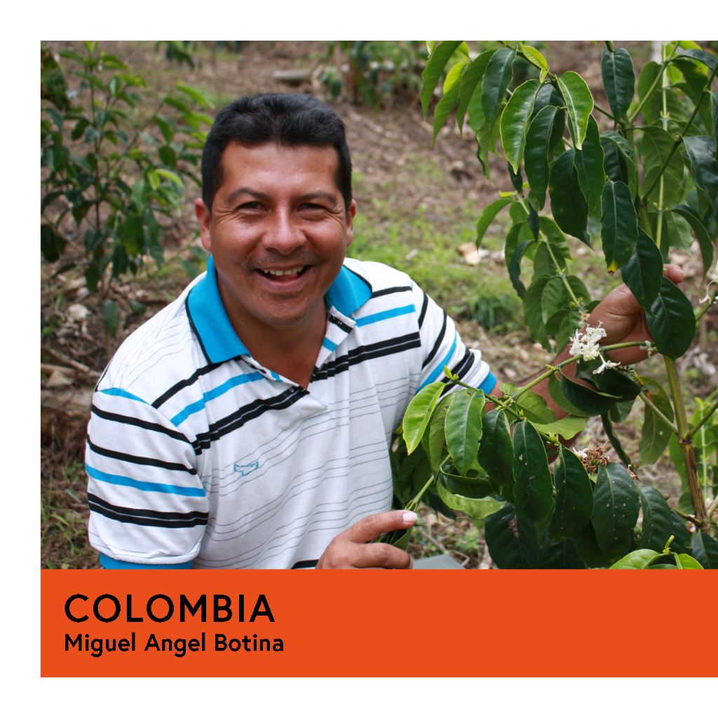 Colombia | Miguel Angel Botina | Caturra | Double Anaerobic | Filter | 100g - Proud Mary Coffee Melbourne