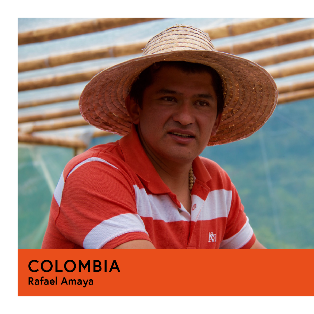 Colombia | Rafael Amaya | Caturra | Anaerobic Washed 180hr | Espresso | 250g - Proud Mary Coffee Melbourne