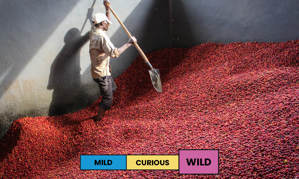 Burundi | Gisha | Red Bourbon | Natural | Espresso | 250g
