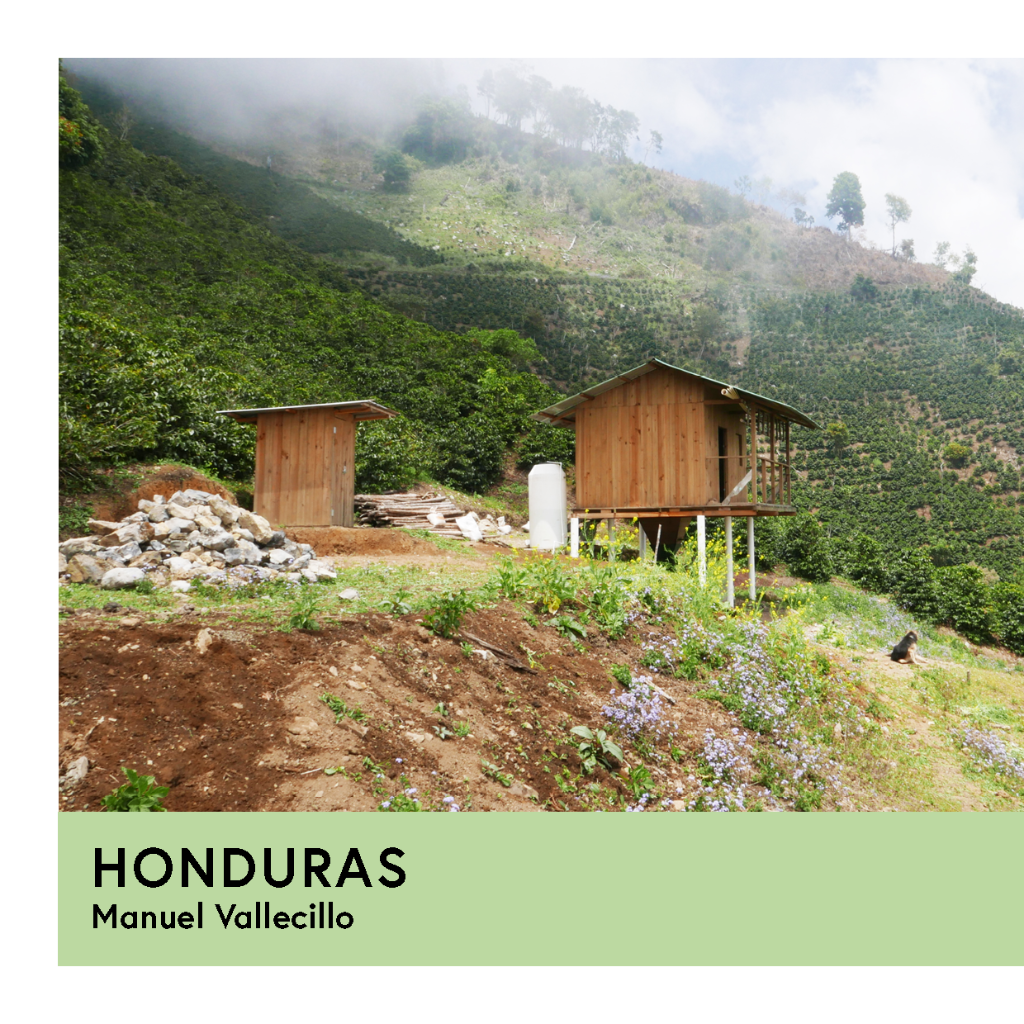 Honduras | Manuel Vallecillo | Pacas | Anaerobic Honey 72hr. | Filter | 250g - Proud Mary Coffee Melbourne
