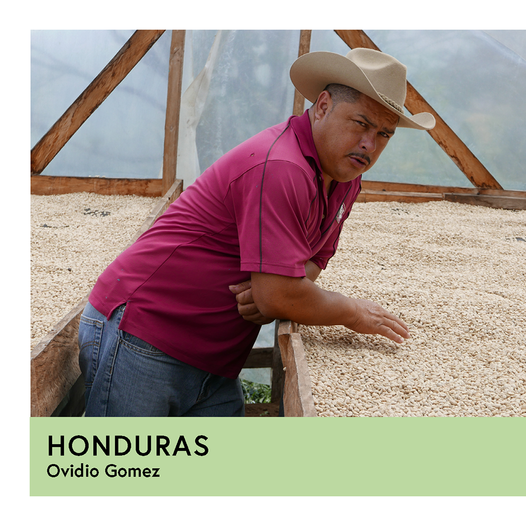 Honduras | Ovidio Gomez | Catuai | Natural | Filter | 250g - Proud Mary Coffee Melbourne