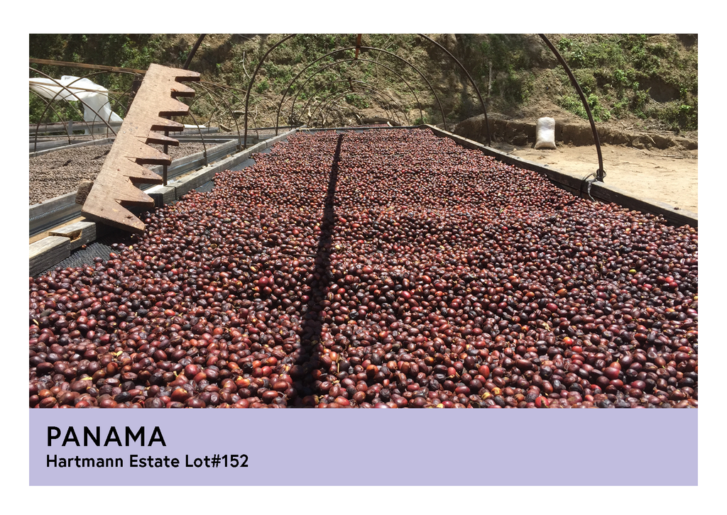 Panama | Hartmann Estates Lot#152  | Caturra & Catuai | Natural | Filter | 250g