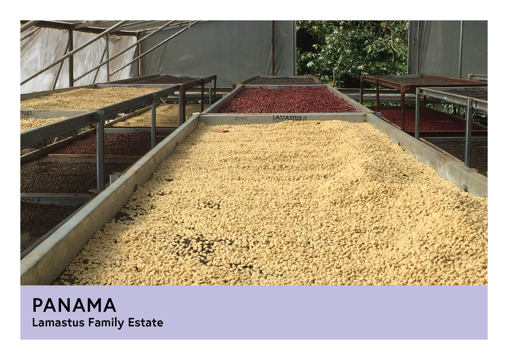 Panama | Lamastus Family Estates  | Catuai | Anaerobic Natural | Filter | 200g