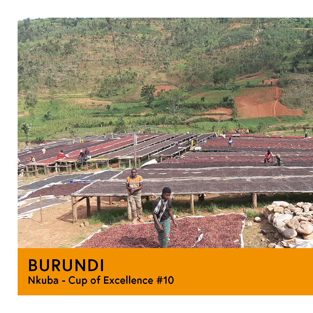 Burundi | Nkuba COE #10  | Red Bourbon | Natural | Filter | 200g - Proud Mary Coffee Melbourne