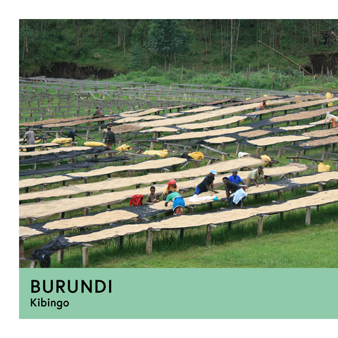 Burundi | Kibingo | Red Bourbon | Honey | Filter | 250g