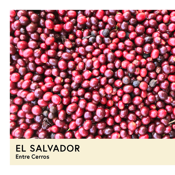 El Salvador | Entre Cerros | Bourbon | Natural | Espresso | 250g - Proud Mary Coffee Melbourne