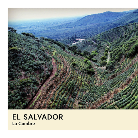 El Salvador | La Cumbre | Orange Bourbon | Natural | Filter | 100g