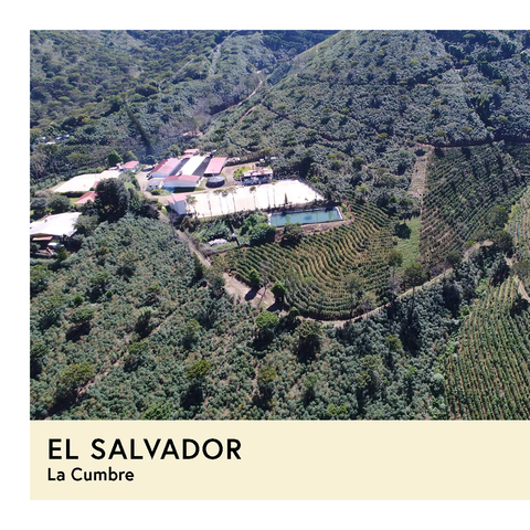 El Salvador | La Cumbre | SL34 | Honey | Filter | 200g