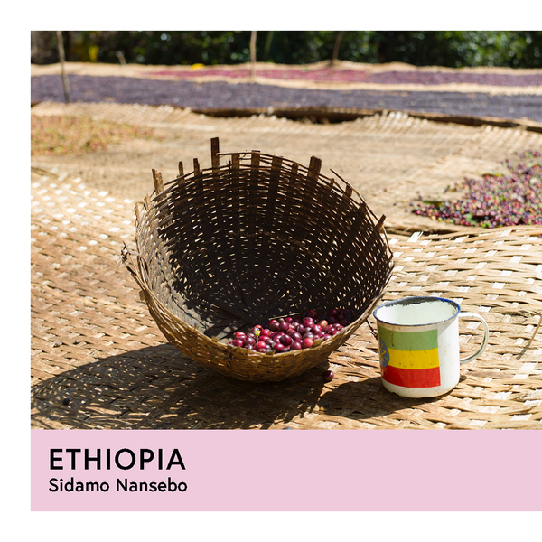 Ethiopia | Sidamo Nansebo Ato Girma | Heirloom | Natural | Filter | 250g - Proud Mary Coffee Melbourne