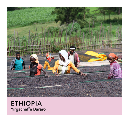 Ethiopia | Yirgacheffe Dararo | Heirloom | Natural | Espresso | 250g