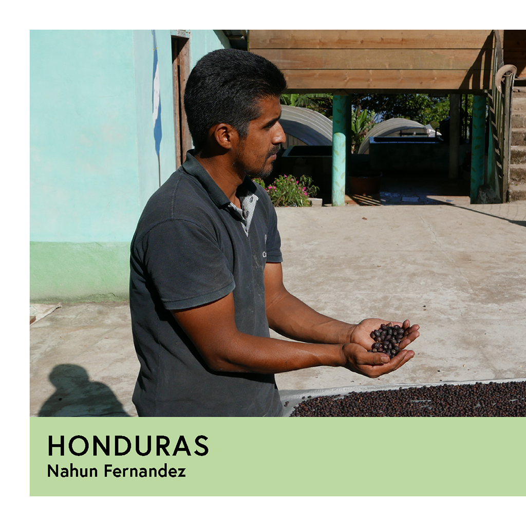 Honduras | Nahun Fernandez | Parainema | Natural | Filter | 250g - Proud Mary Coffee Melbourne