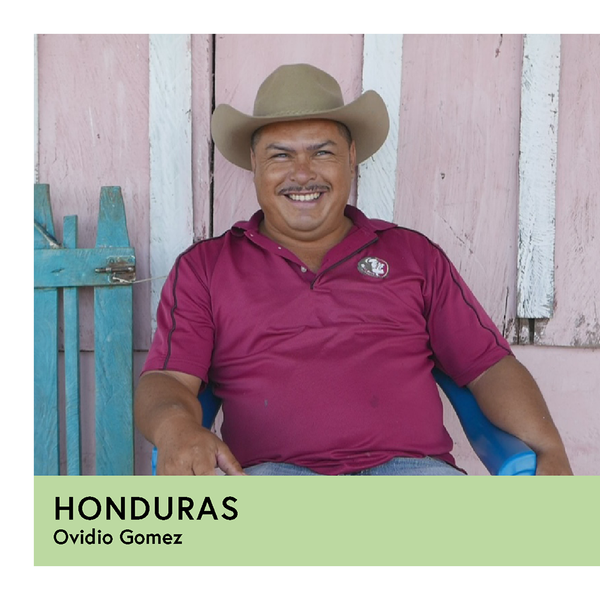 Honduras | Ovidio Gomez | Catuai | Anaerobic Washed 96hr | Filter | 250g - Proud Mary Coffee Melbourne