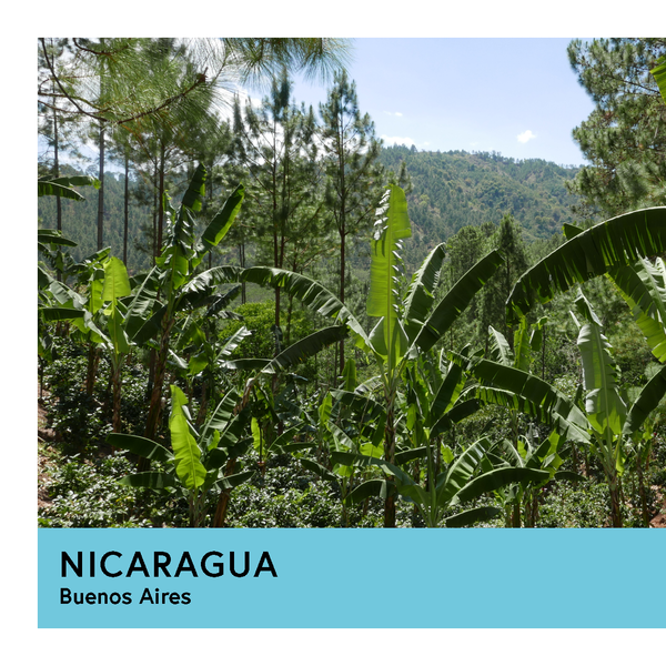 Nicaragua | Buenos Aires | Maracaturra | Anaerobic Natural 48hr | Filter | 250g - Proud Mary Coffee Melbourne