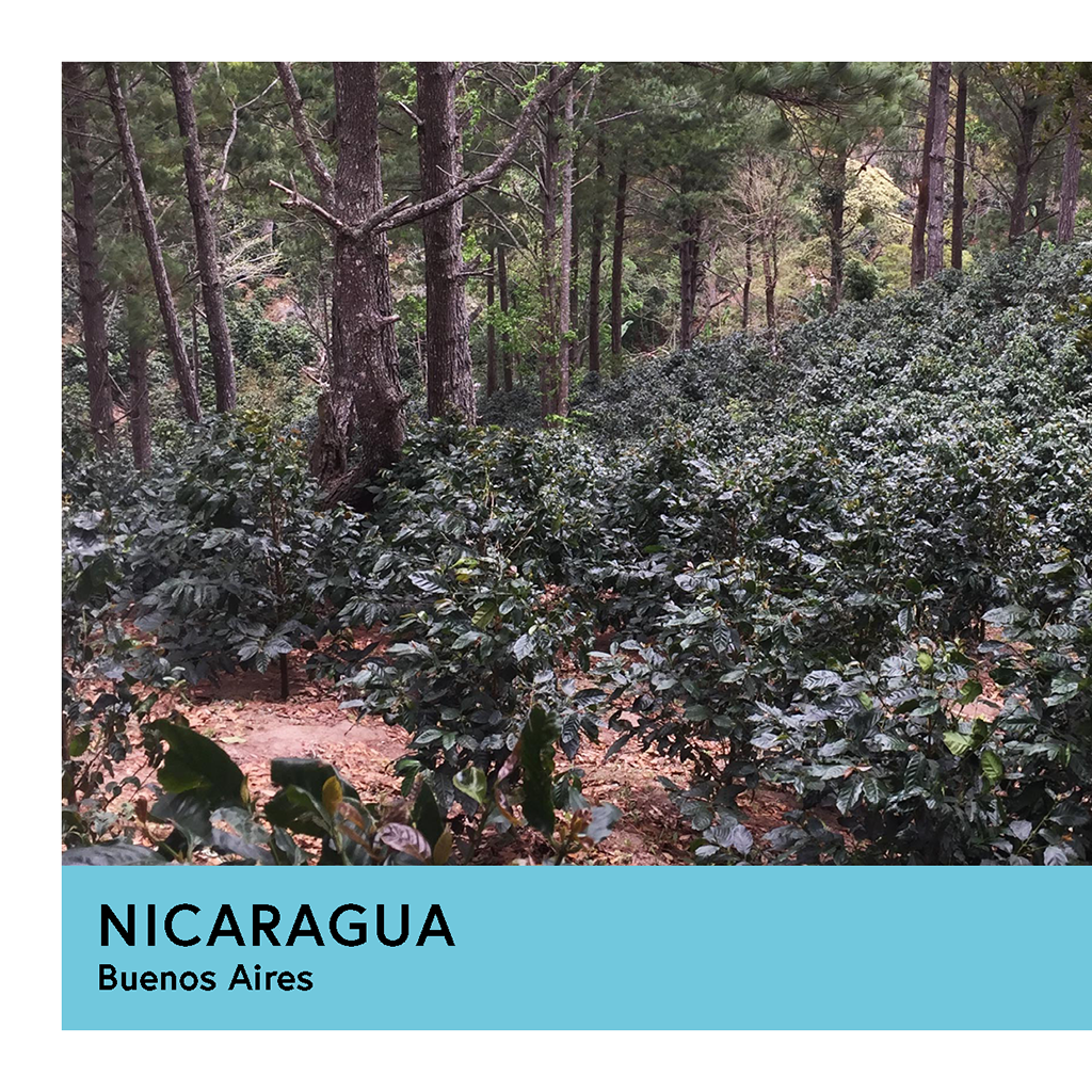 Nicaragua | Buenos Aires | Yellow Catuai | Natural | Filter | 250g - Proud Mary Coffee Melbourne