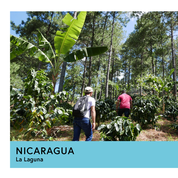 Nicaragua | La Laguna | Caturra | Anaerobic Natural 72hr | Filter | 250g - Proud Mary Coffee Melbourne