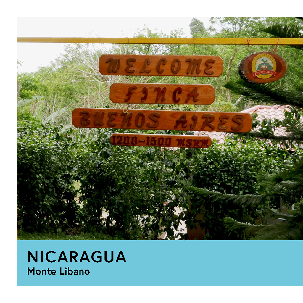 Nicaragua | Monte Libano | Caturra | Washed | Filter | 250g - Proud Mary Coffee Melbourne