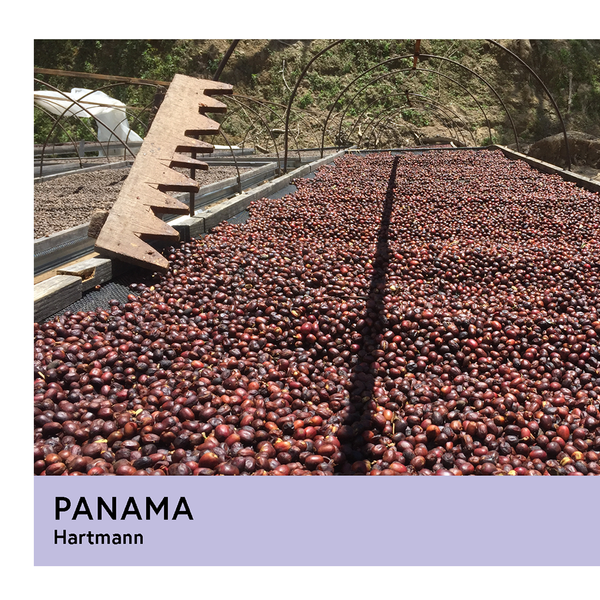 Panama | Hartmann | Caturra & Catuai | Natural | Espresso | 250g - Proud Mary Coffee Melbourne