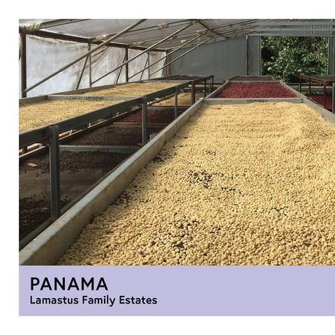 Panama | Lamastus Family Estates | Catuai | Natural | Filter | 200g