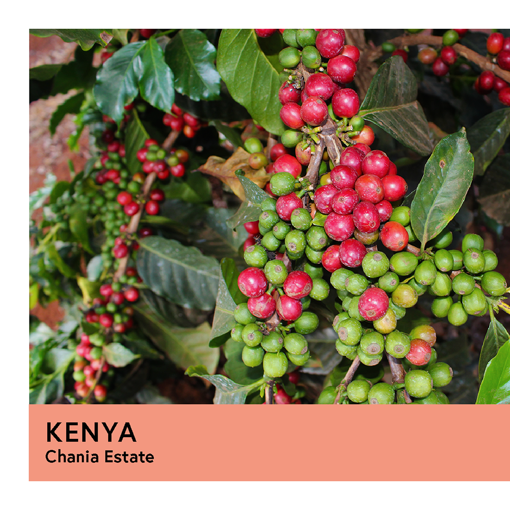 Kenya | Chania Estate | French Mission | Honey | Espresso | 200g - Proud Mary Coffee Melbourne