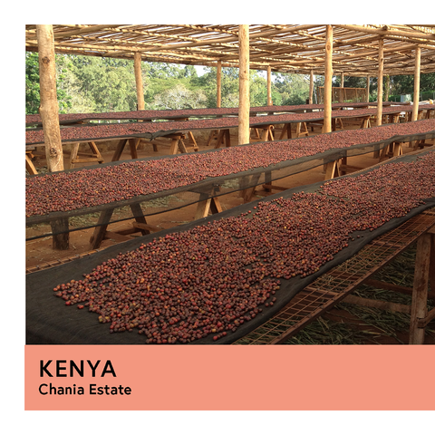 Kenya | Chania Estate | French Mission | Natural | Espresso | 250g