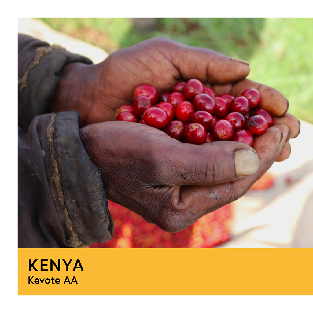 Kenya | Kevote AA | SL28, SL34, Ruiru 11, & Batian | Washed | Espresso | 250g - Proud Mary Coffee Melbourne