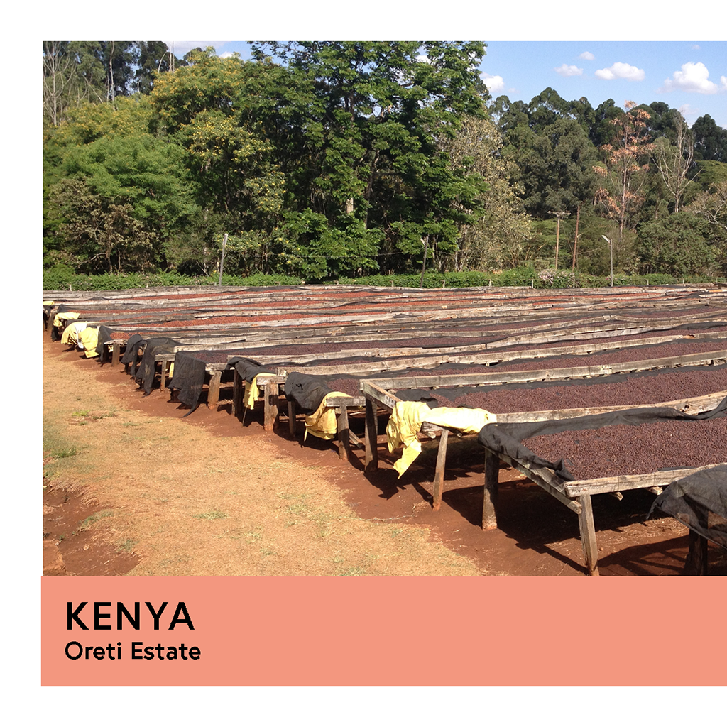 Kenya | Oreti Estate | SL28 & SL14 | Natural | Filter | 200g - Proud Mary Coffee Melbourne