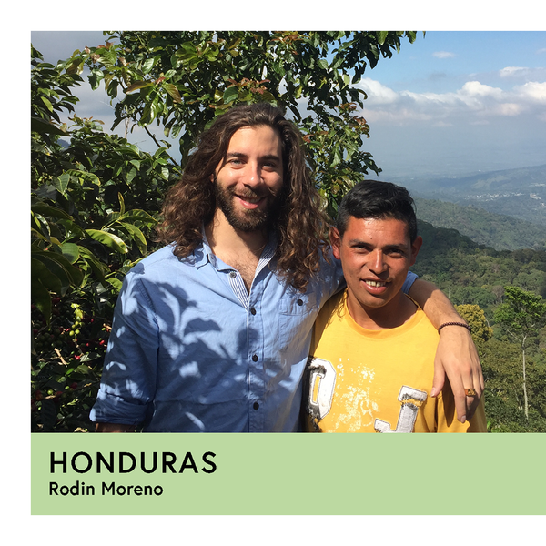 Honduras | Rodin Moreno | Pacas | Anaerobic Washed 48hr | Filter | 250g - Proud Mary Coffee Melbourne