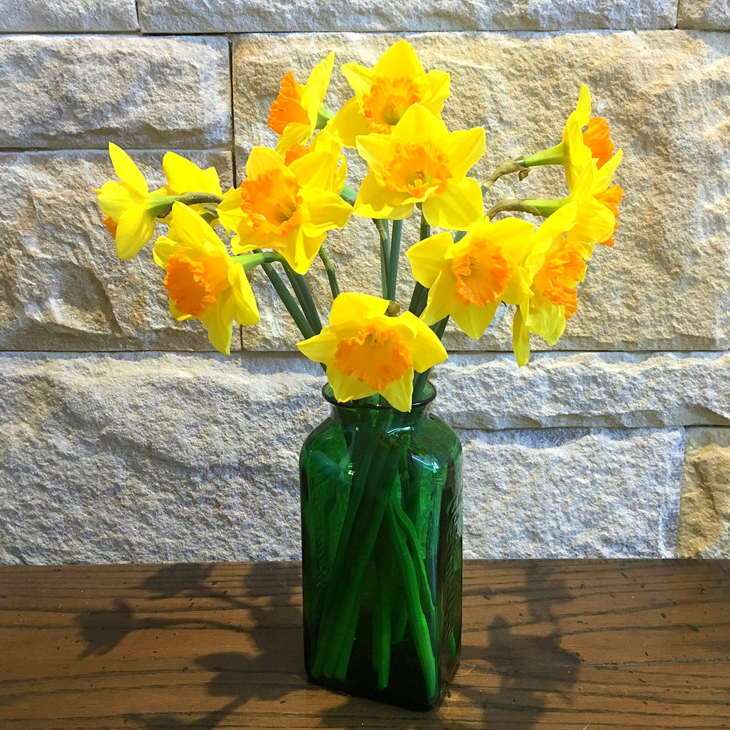 Handblown Jagermeister Vase and daffodils