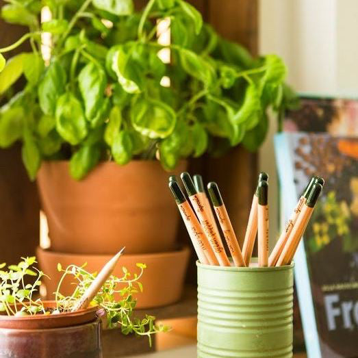 Sprout pencils and basil plant