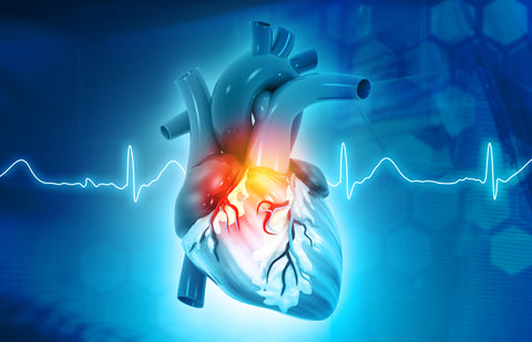 NMN may be able to protect the heart against various forms of cardiovascular disease.