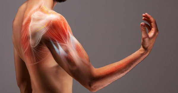 boosting NAD supports muscle growth with age