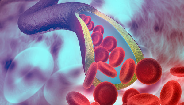 Estrogen is thought to positively affect the innermost layers of our arteries, which keeps blood vessels flexible, relaxed, and able to accommodate healthy blood flow