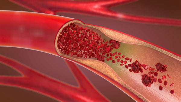 Estrogen acts on estrogen receptors on the lining of blood vessels to relax them, causing them to widen and increase circulation.