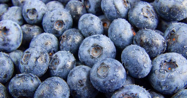 the best food source of pterostilbene is found in blueberries