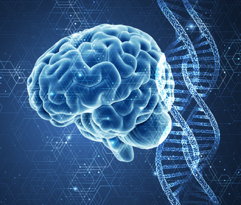 Gene activation patterns modulate healthy brain aging and Alzheimer's progression