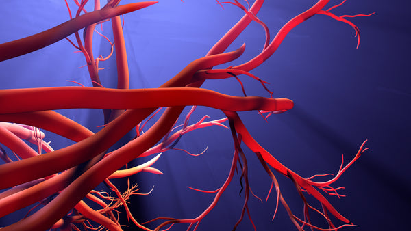 capillaries are the first step for producing tube-like structures that will mature into blood vessels.